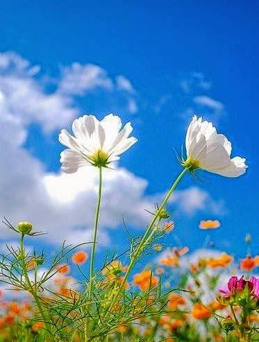 Nikmat Dari Allah SWT - Salam Nuzul Al-Quran 1437H-2016