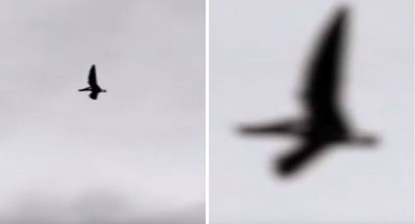 Ingat burung biasa, bila tengok dengan dekat, semua orang jerit terkejut!