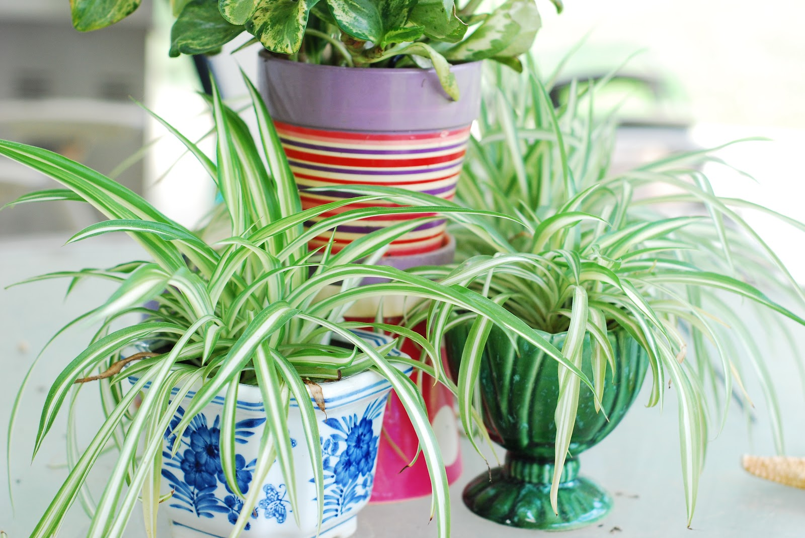 Best indoor garden plants caring for your indoor miniature gardens the mini indoor plants - Popular indoor plants ...