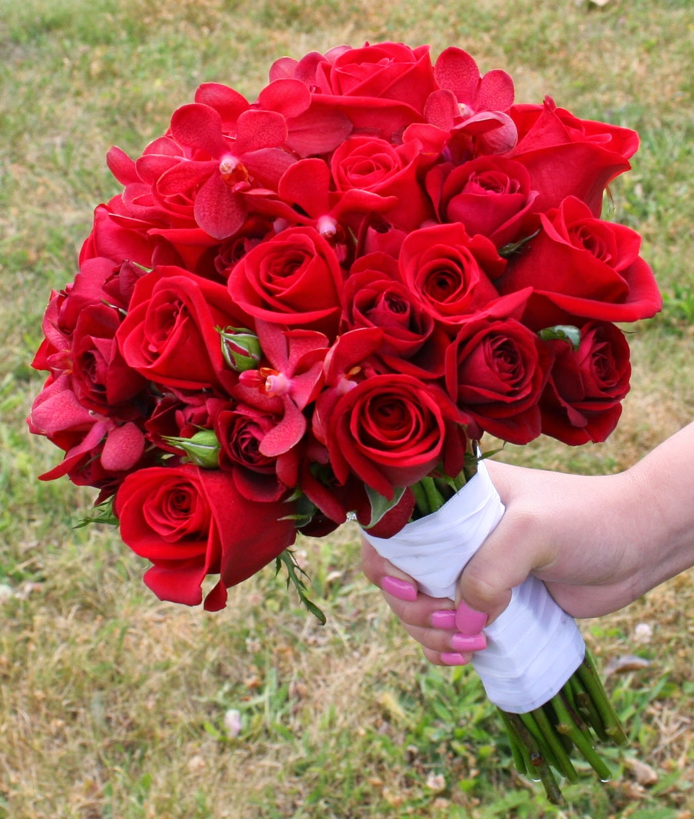 Bunga Mawar Si Bunga Cinta Beda Warna Beda Makna