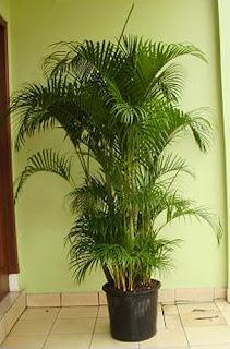 Pusat tanaman rental jakarta | penyewaan tanaman untuk gedung perkantoran dan apartmen