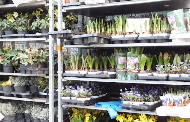 Bulbos, Columbia Road,Flower Market, Londres, London, Mercado de Flores, Blog de Viajes, Travel Blogger, Elisa N