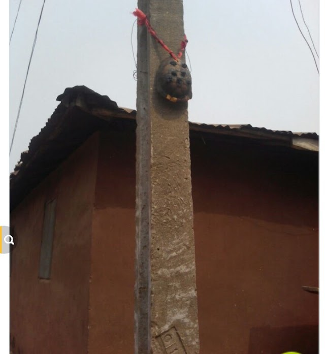 A Residents Tie Tortoise on Electric Pole to Chase The PHCN Away