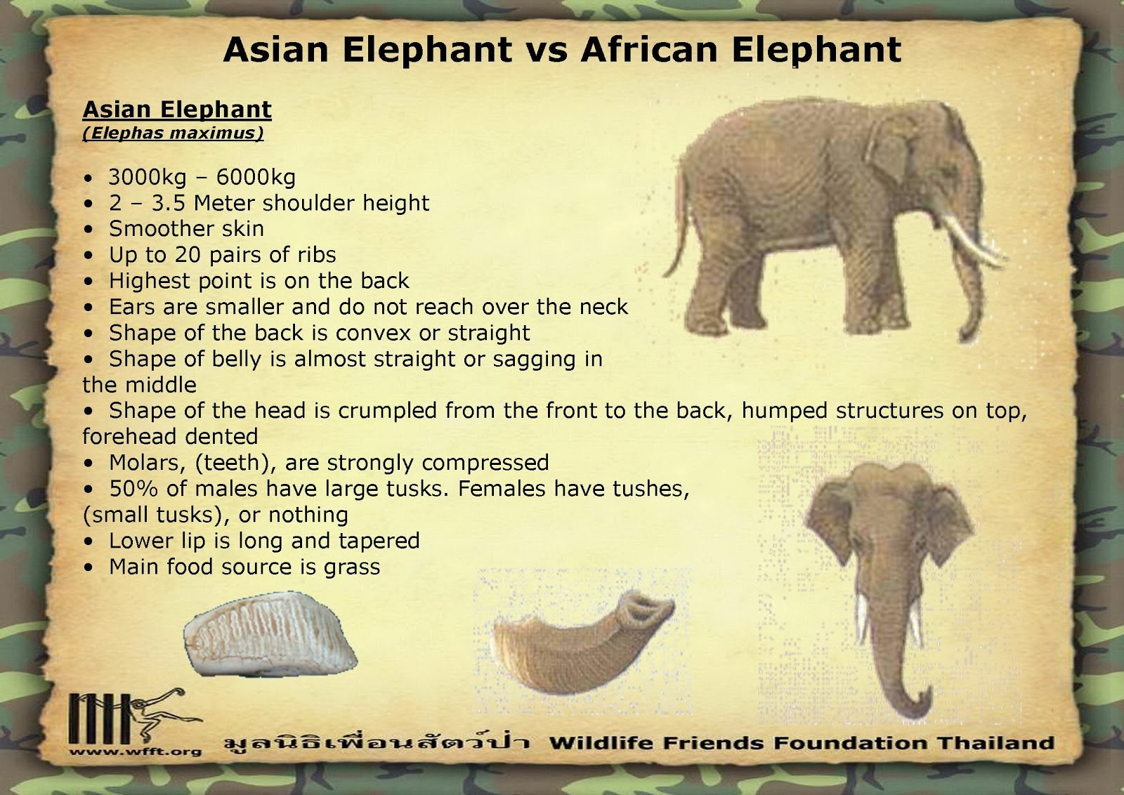 Rules of the Jungle: Difference Between African and Asian ...