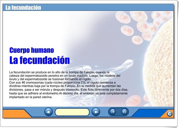 """""""La fecundación"""" (Presentación interactiva de Ciencias Naturales de Secundaria)"""