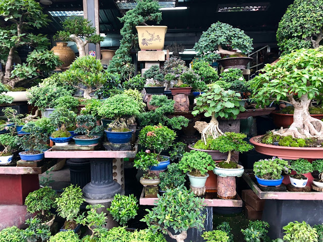 Bonsai Trees in Chautchak Market in Bangkok Thailand