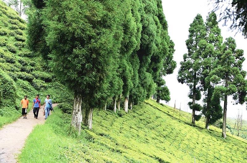 An idyllic path along the Happy Valley Tea Estate in Darjeeling.