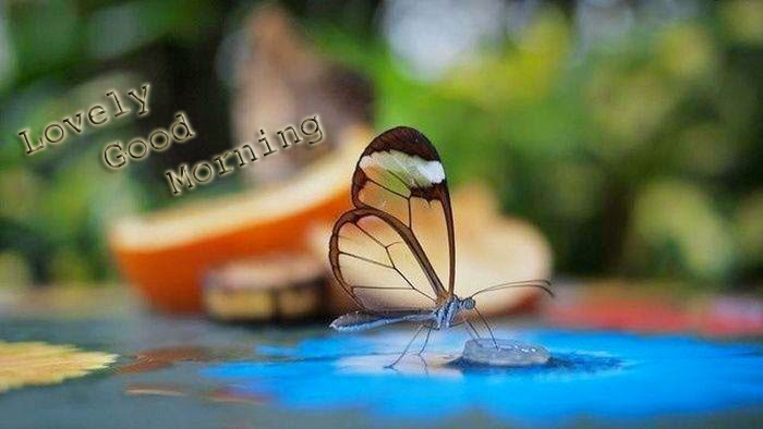goog morning wallpaper nice butterfly