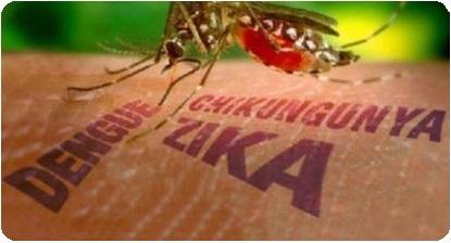 Virus Ada Virus Zika Di Indonesia
