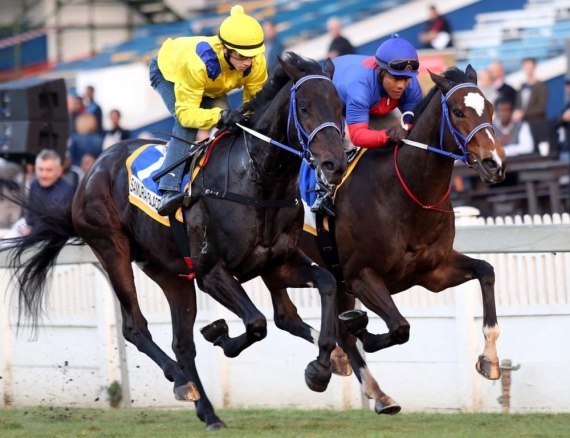Samuari Blade in yellow galloping with French Navy - Vodacom Durban July 2016