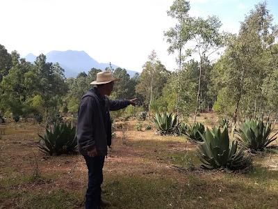 Thomas Garcia Reforestation Conafor Michoacan Mexico El Carmen Ejido