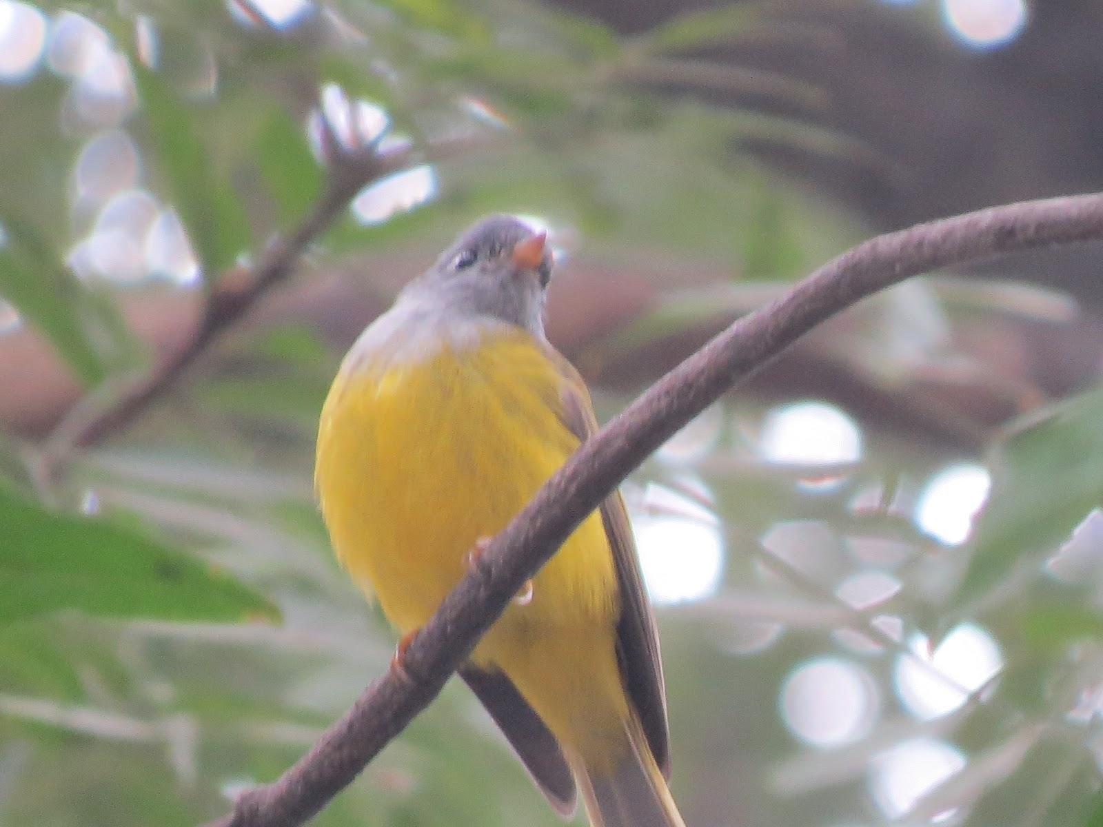 Birds In DelhiIndia