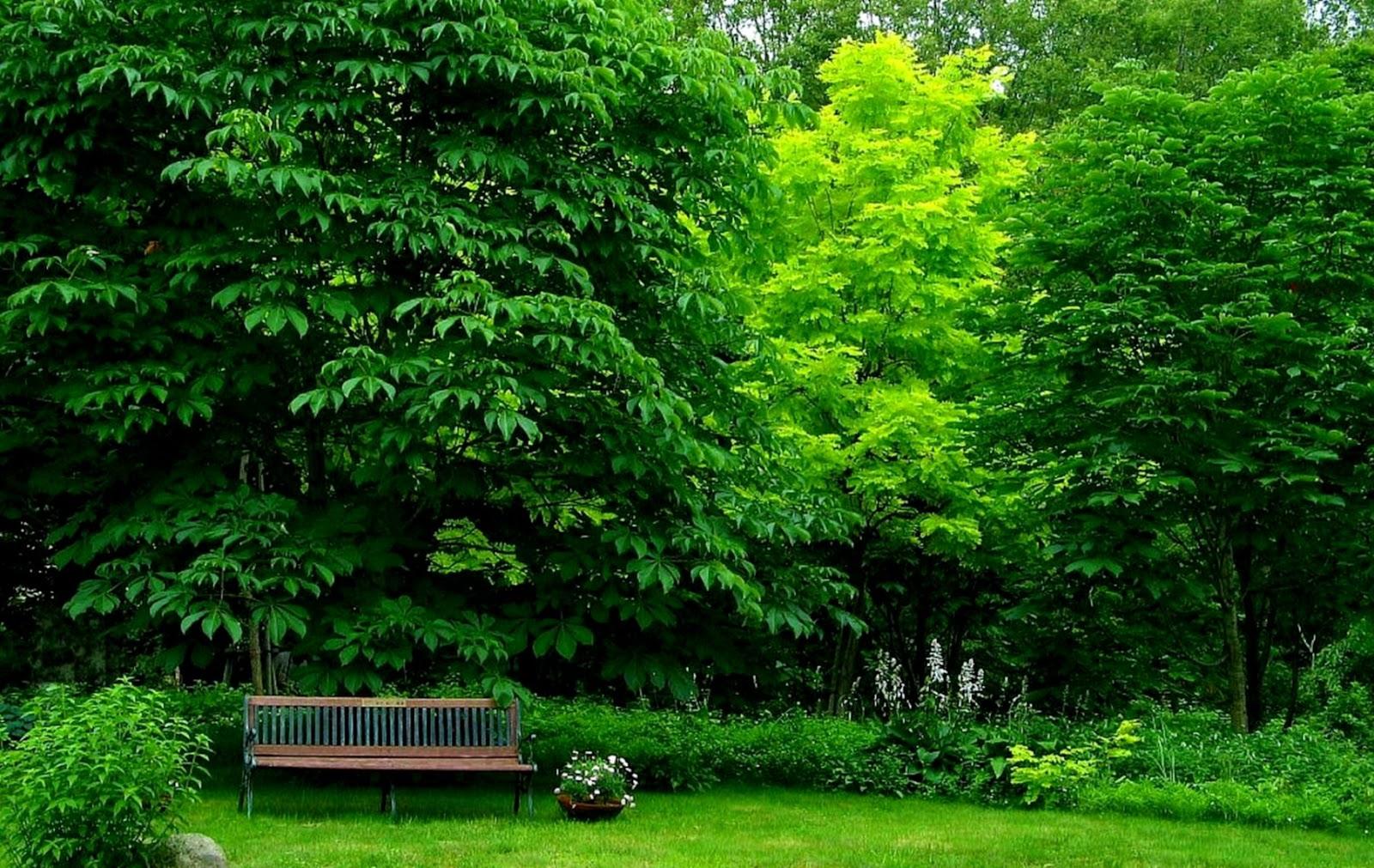 Bench Park Grass Trees Hd Wallpaper Wallpapers Awards