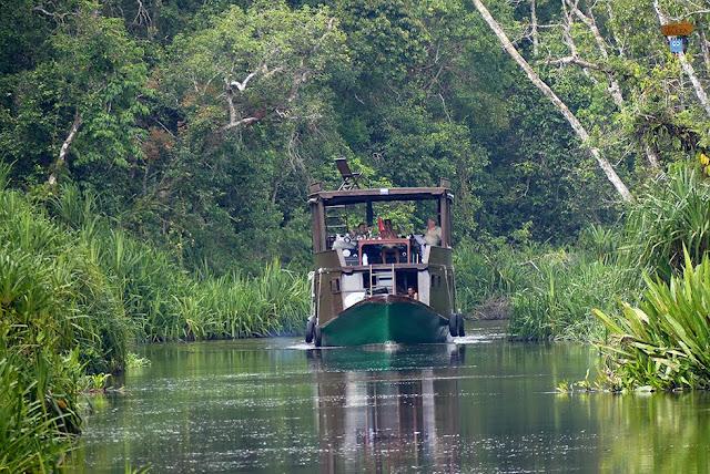 Koltok en Borneo