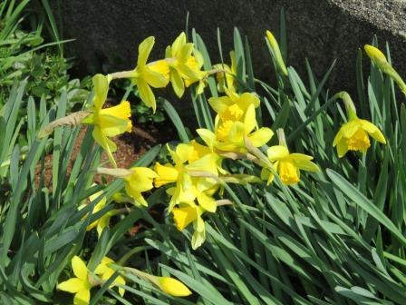 流浪の画家」の隆くん: 〇陽気な春の土手を行く、昼休み