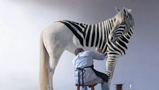 A man sits underneath a white horse shaped animal. He is half way through painting black stripes on it.