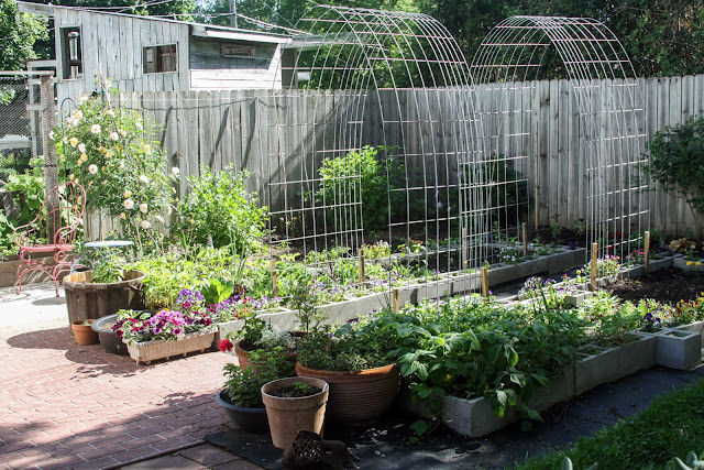 garden, June, Container Gardening, raised beds, cinder block raised beds, hog panel garden arches, Anne Butera, My Giant Strawberry