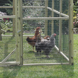 Flyte so Fancy Protection Pens for Poultry
