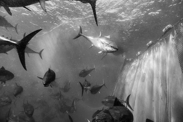 Francesco Zizola, foto della tonnara di Porto Paglia