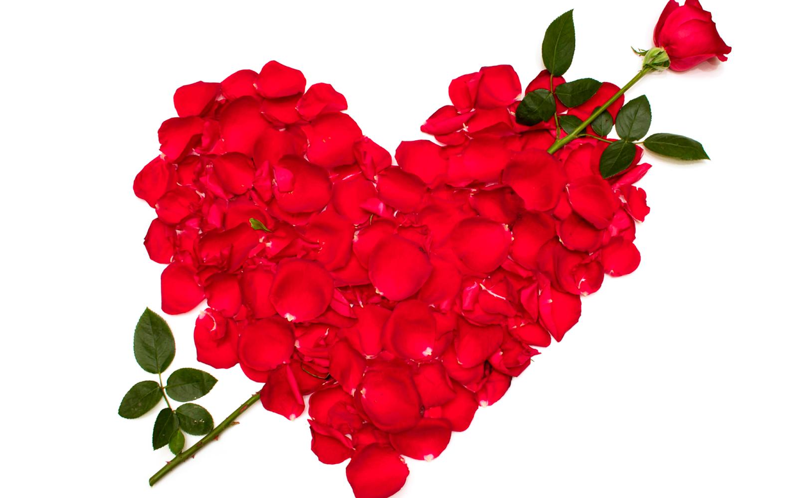 Fondos De Pantalla Animados De San Valentín: ® Gifs Y Fondos Paz Enla Tormenta ®: FONDOS DE PANTALLA
