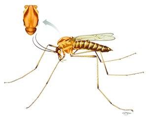 mosquito dixa