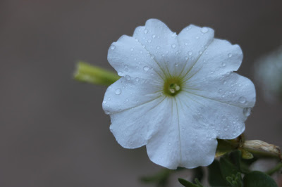 Raindrops on Flowers in the Garden