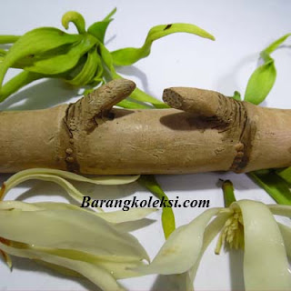 pring petuk asli, pring petuk patil lele, harga pring petuk 2015, cara menggunakan bambu petuk, cara mencari bambu petuk, ciri ciri pring petuk asli, pembeli bambu petuk, cara merawat pring petuk