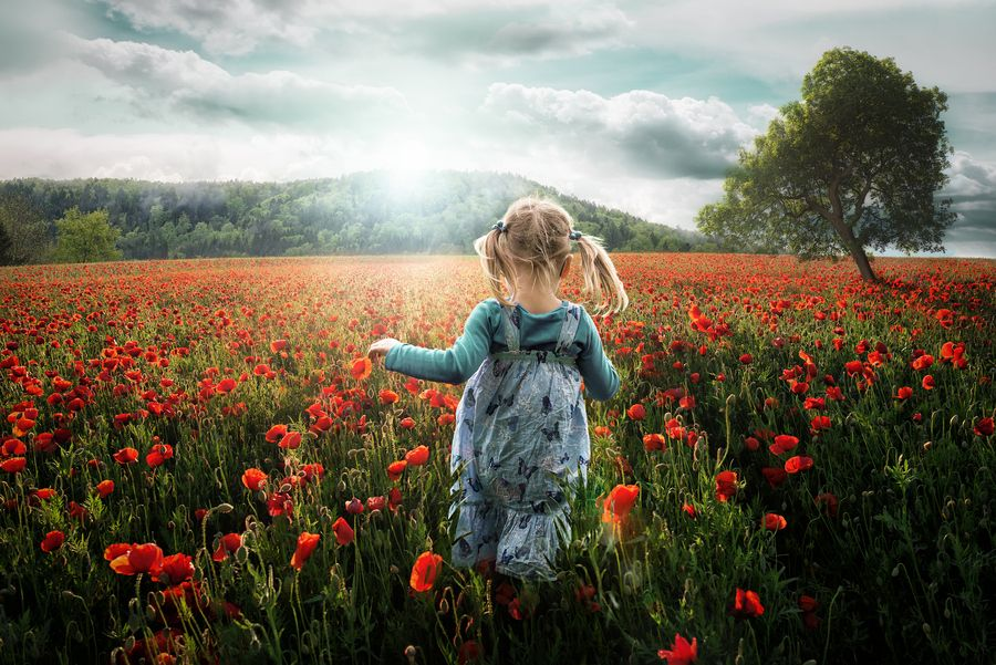 1. Into the Poppies by John Wilhelm