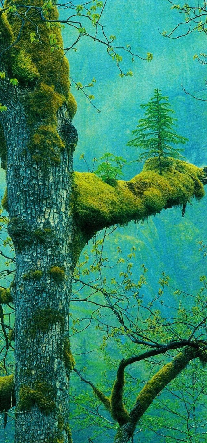 17 Pictures Of Trees That Prove The Miracle Of Life - A Tree Growing On Another Tree