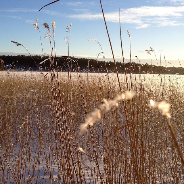 talvi, kaislikko