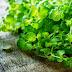 Υπέρταση: 5 βότανα που την μειώνουν αποτελεσματικά ...