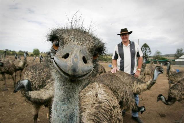 foto lucu saat hewan ikut berselfie bersama manusia-8