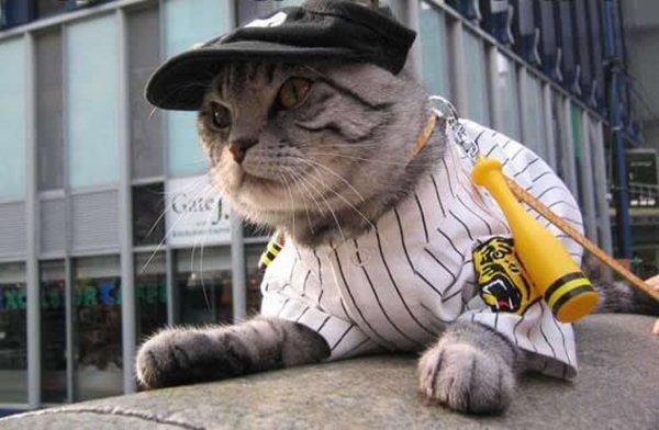 50 Funny Pet Costumes 50 Pics Amazing Creatures