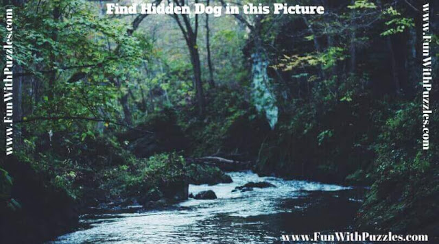 Picture Puzzle to find Hidden Dog