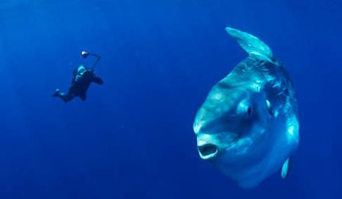 Jenis Ikan Yang Menyendiri Tapi Bukan Galau