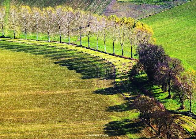 suite d arbres decrivant une courbe