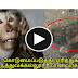Monkey Killed by Medical College Student