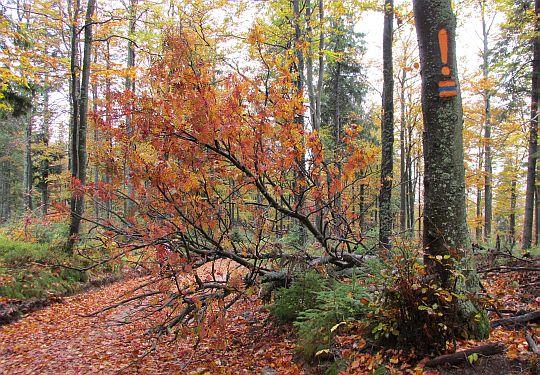 Niebieski szlak w barwach jesieni.