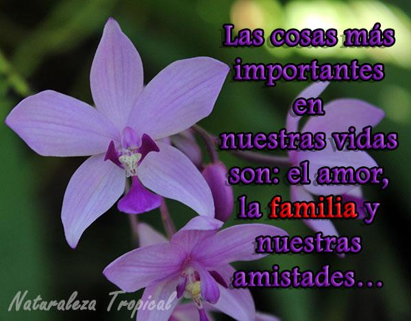 Las cosas más importantes en nuestras vidas son: el amor, la familia y nuestras amistades…