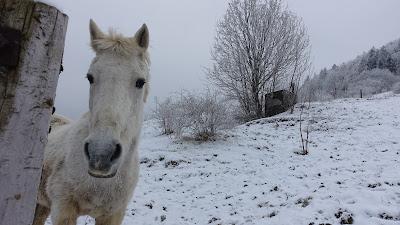 Weisses Pferd bei der Wasserfallen (BL)