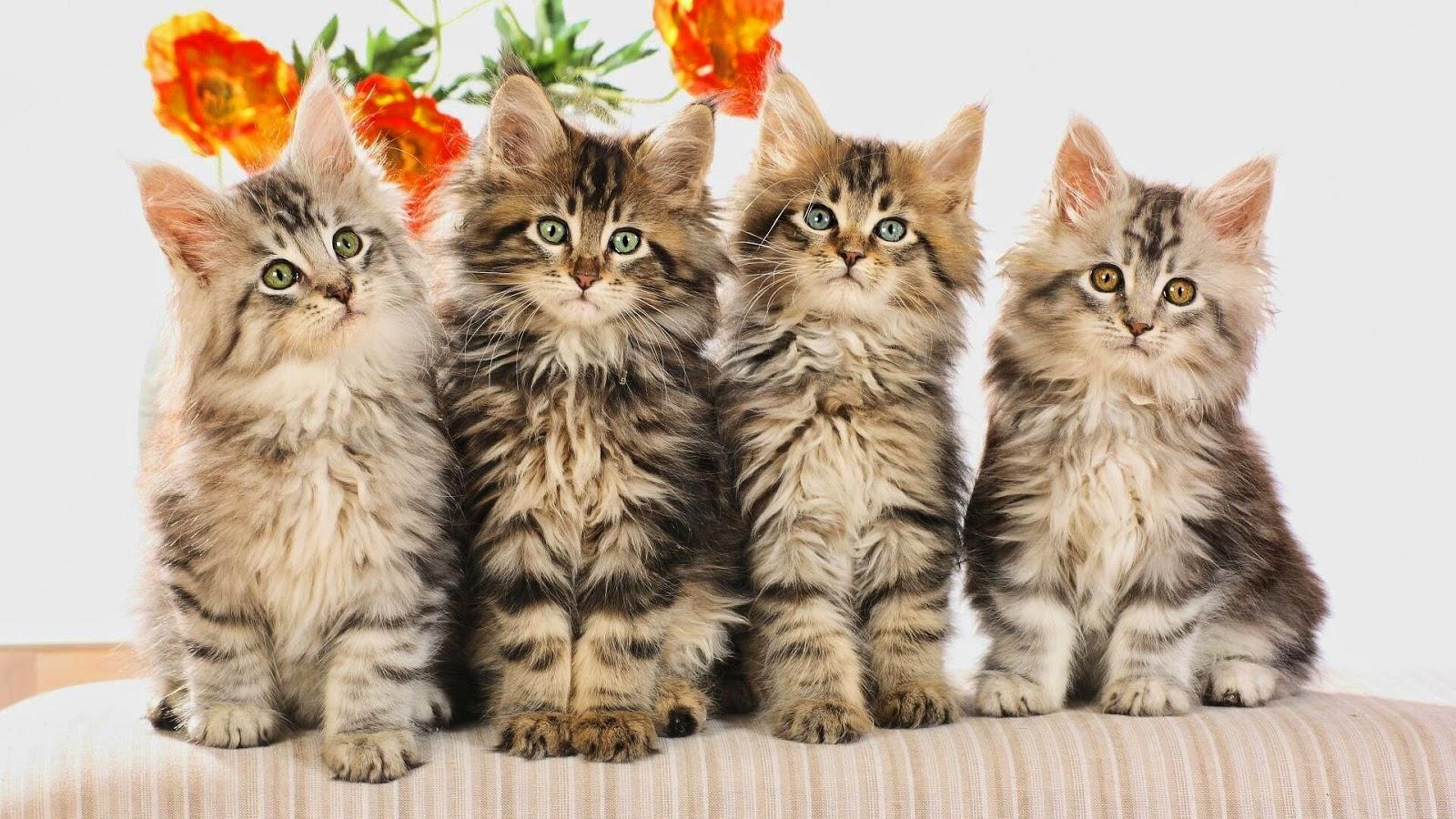 صيدلية إيجى فيت لعلاج القطط   EGYvet Pharmacy