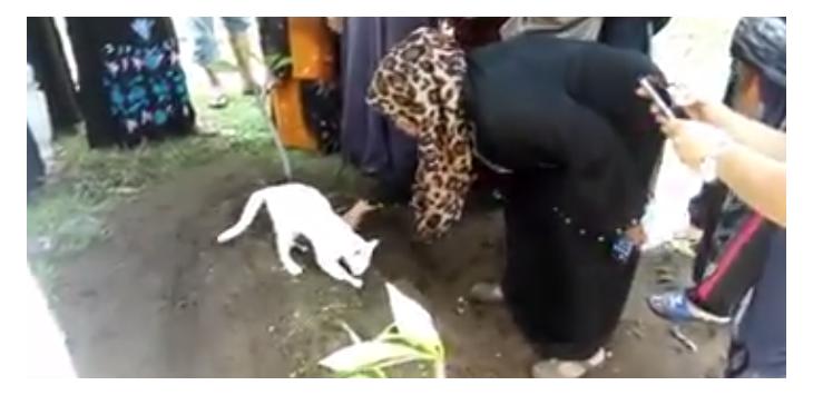 Subhanallah! Kucing Ini Seperti Tak Rela Tuannya Dikubur, Lihat Videonya