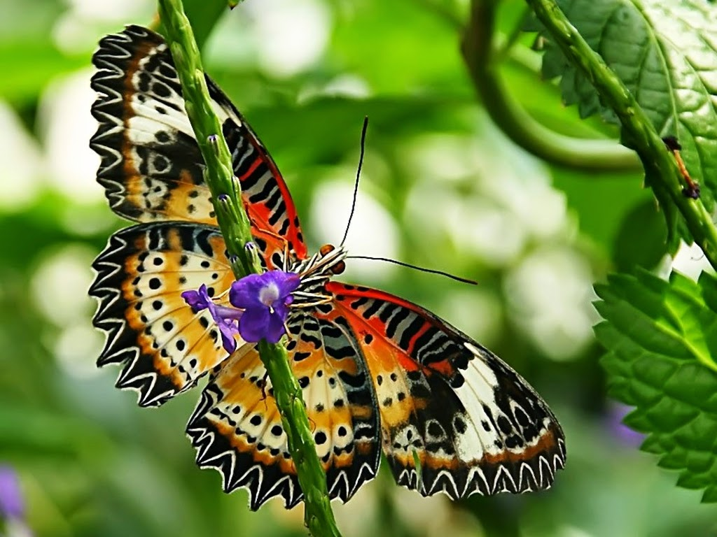 7 wonders of the world: Butterfly Hd Photos & Wallpapers  7 wonders of th...