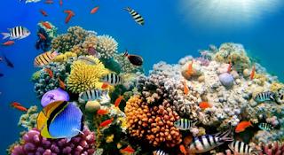 Contoh Pertanyaan dan Jawaban tentang Biota Laut