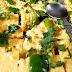 suji dhokla kaise banaye - how to cook suji dhokla