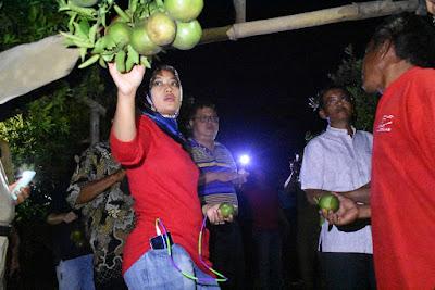 Bupati Chusnunia dan Investor Malaysia Kunjungi Kebun Buah Naga dan Jeruk