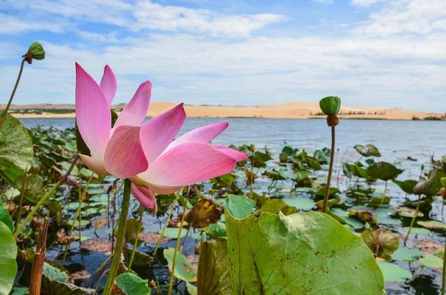 Bau Sen – An oasis in Mui Ne's sand dunes 1