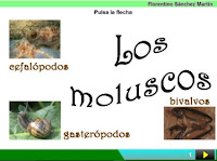 http://cplosangeles.juntaextremadura.net/web/edilim/curso_3/cmedio/animales_invertebrados_3/moluscos/moluscos.html