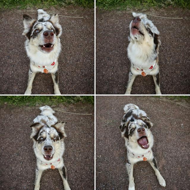 Hundefotografie, Canon, Hundeblog, Aussieblog, Hazel