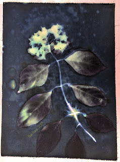 Wet Cyanotype_Sue Reno_Image 113